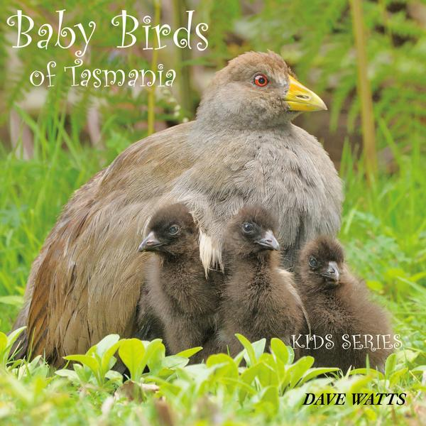 Photographic children's book on baby birds of Tasmania