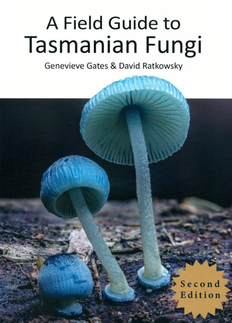 Blue fungi on forest floor.