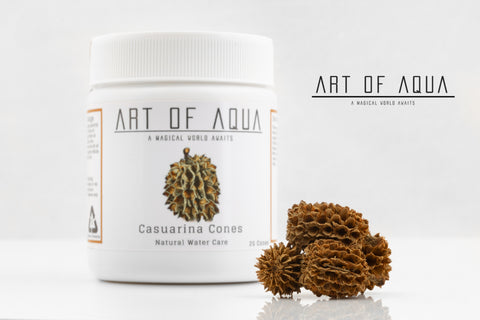 Art of Aqua - Casuarina Cones (25g)