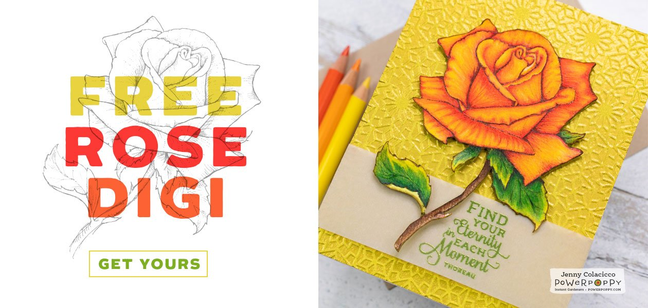 Free Rose Digital Download