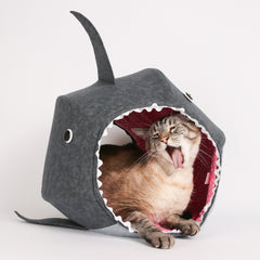 Celebrate Shark Week with your cat! Create funny photo edits...