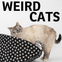 This this blog post proves that cats do weird things,...
