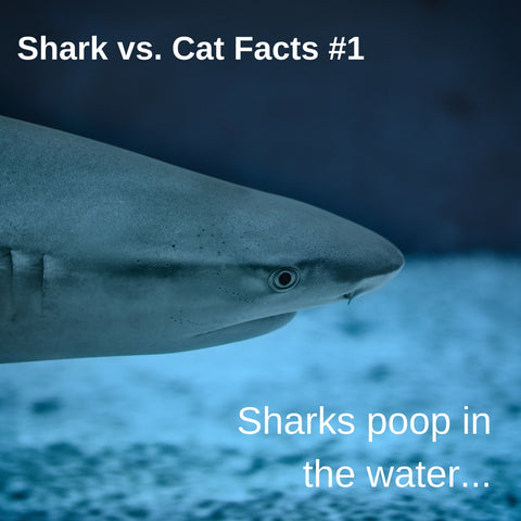 Sharks vs. Cats facts: how do these animals poop? Sharks poop in the water