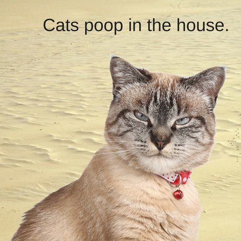 Sharks vs. Cats facts: how do these animals poop? Cats poop indoors