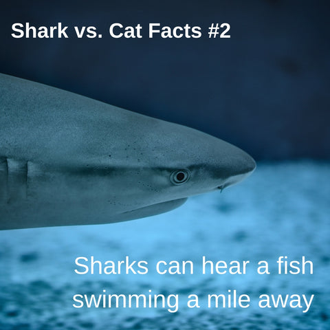 Sharks vs. Cats facts: how sharks hear underwater
