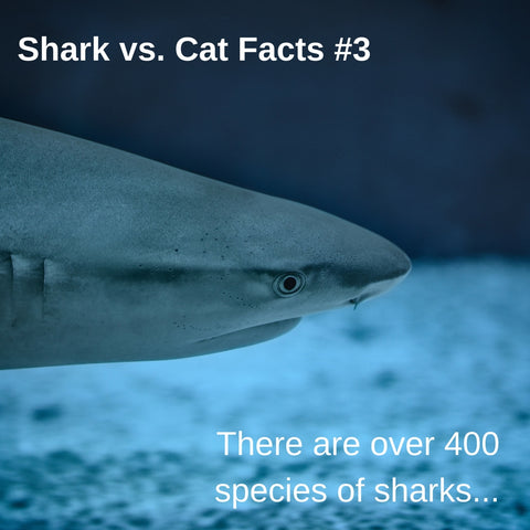 Sharks vs. Cats facts: sharks are a kind of fish, and there are over 400 species of sharks