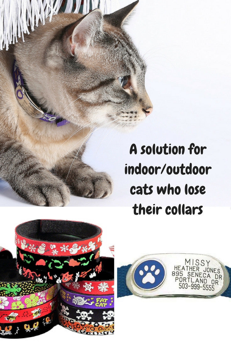 A solution for indoor or outdoor cats who lose their collars