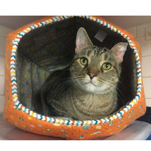 Moe inside the Cat Ball at Anjellicle Cats Rescue