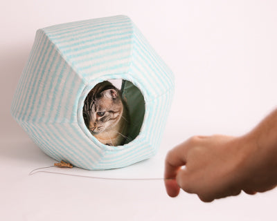 A cat hides inside the Cat Ball® cat bed as he watches a human engaging in play