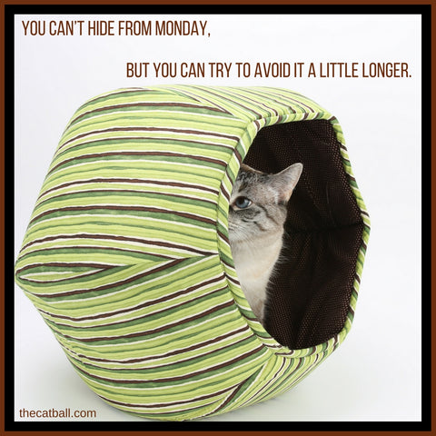 Cat meme by The Cat Ball - Hiding from Monday