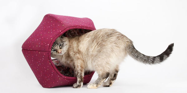 Cat Ball modern cat bed made in a dark raspberry pink with a surprise lining in a cat print fabric