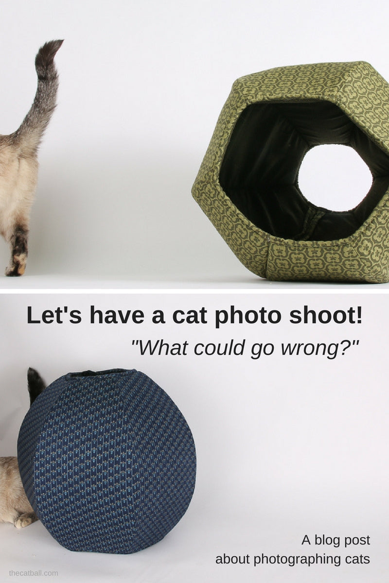 Bloopers and funny cat photos from a cat photo shoot at The Cat Ball World Headquarters