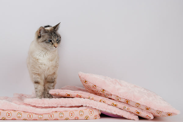 A cat investigates a stack of prototype cat sleeping mats made in a pink luxury faux fur