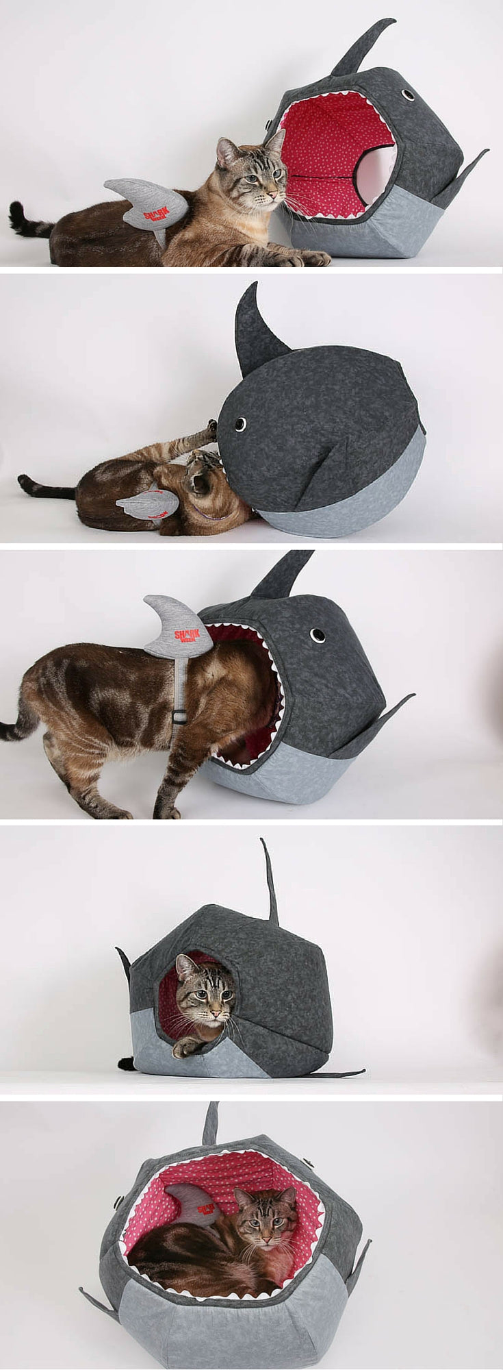Cat explores the shark Cat Ball cat bed while wearing a shark fin for Shark Week