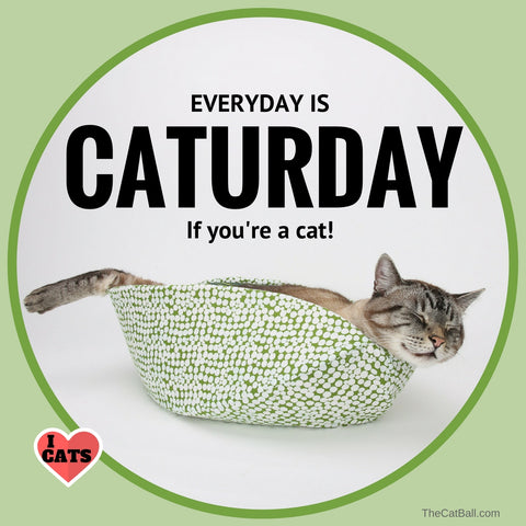 Caturday cat meme by The Cat Ball