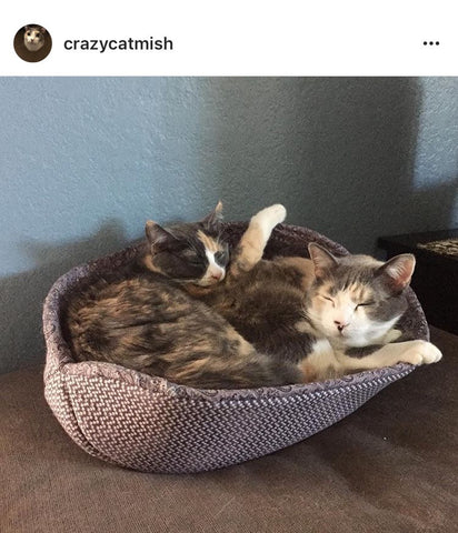 Two cats in a Cat Canoe cat bed. Photo by @crazycatmish on Instagram