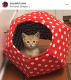 @zucaskittens is a volunteer cat and kitten foster in Oregon