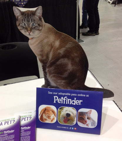 Flat Retro and Petfinder
