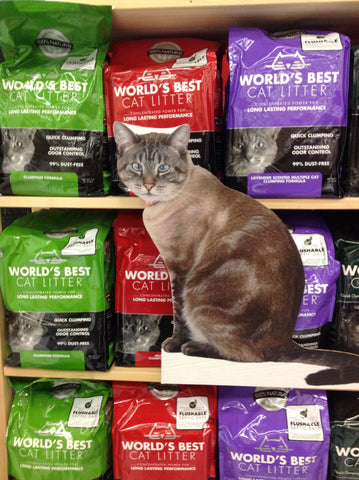 Flat Retro and World's Best Cat Litter