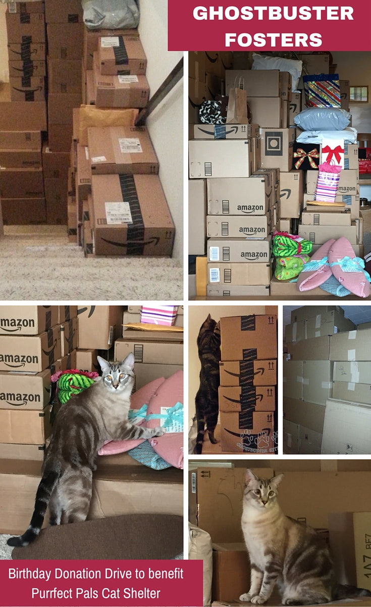 Ghostbuster Fosters birthday present donation drive to benefit Purrfect Pals cat shelter