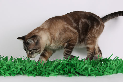 A cat chases a HEXBUG robot toy hidden in a fringed tissue grass mat