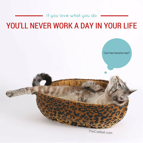 Inspirational cat poster made by The Cat Ball