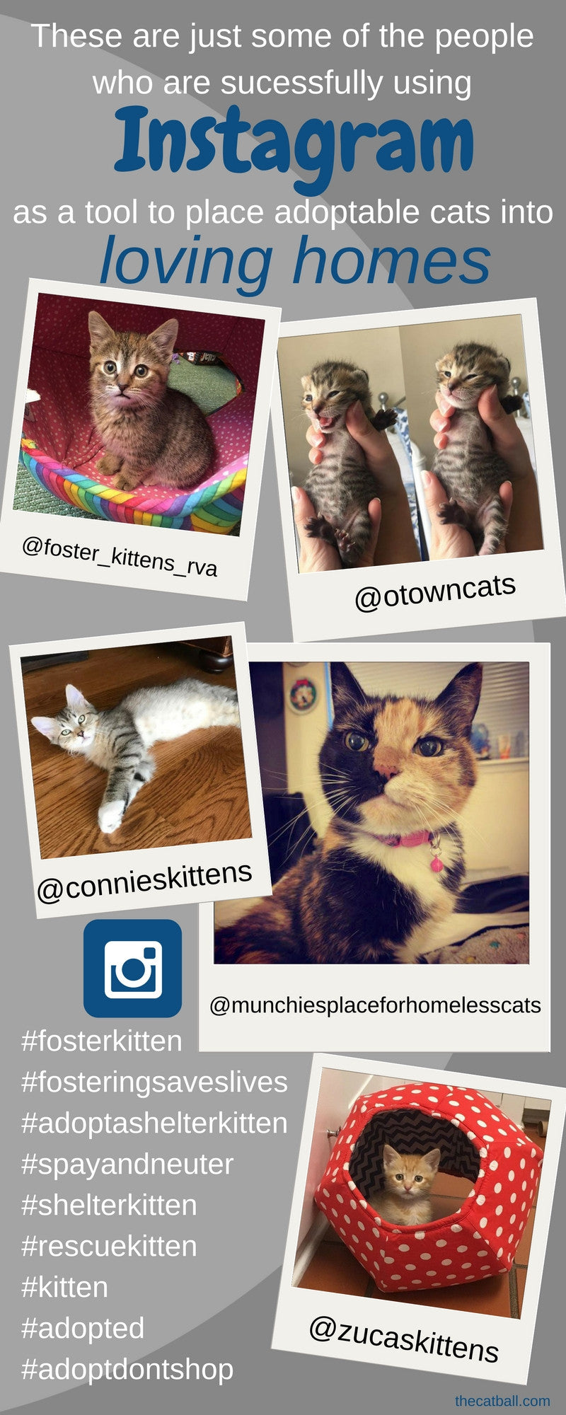 People are successfully using Instagram accounts to promote adoptable cats and kittens, helping the animals to find new homes.