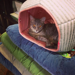 A cat lounging inside a Cat Ball cat bed at Natural Pet Pantry in Kirkland Washington