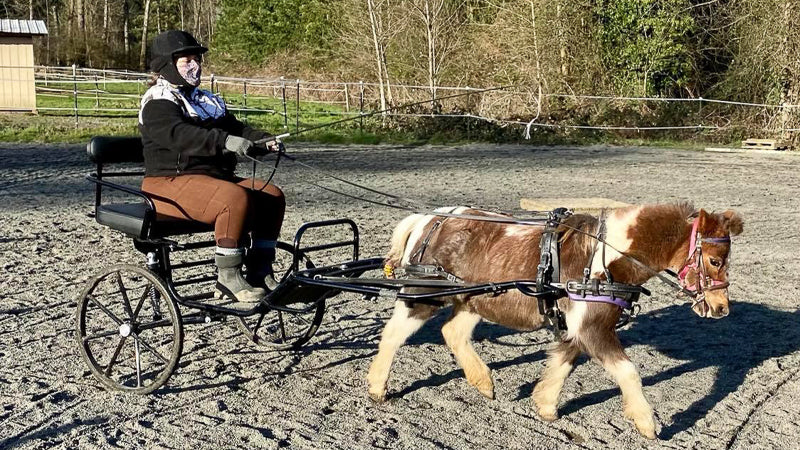 A miniature pony named Cinnamon is pulling a cart made for miniature ponies