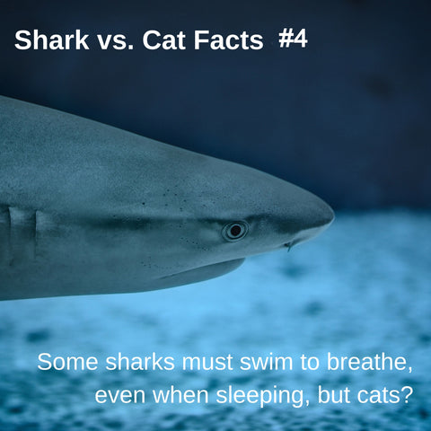 Sharks vs. Cats facts: sharks don't sleep like cats sleep