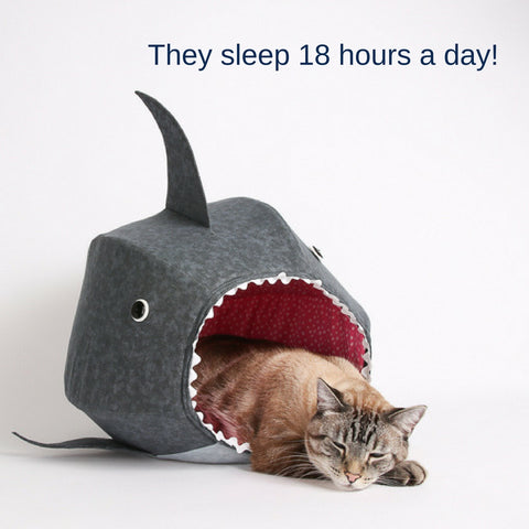 Sharks vs. Cats facts: sharks don't sleep like cats sleep, because cats sleep a lot