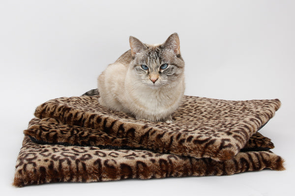 Our cat model Tink sits on a stack of leopard fur cat beds