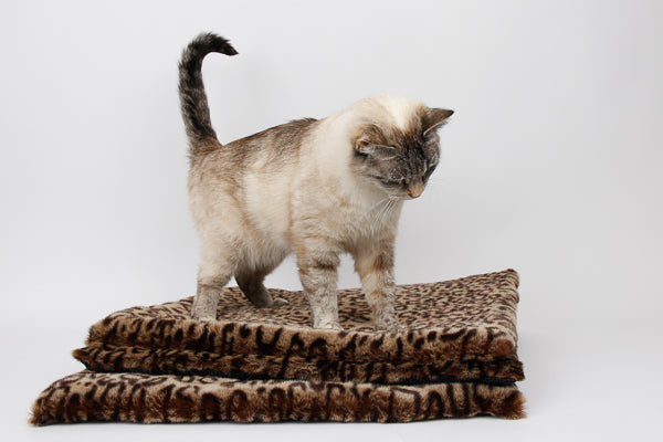 Our cat model Tink standing on a stack of luxury leopard fur cat sleeping mats