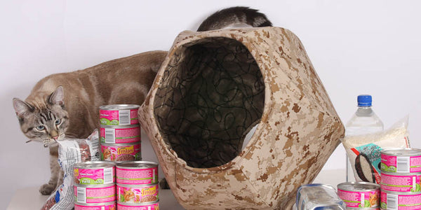 Cats, Zombies, Reality TV and the End of The World the Cat Ball cat bed prepper kitty bugout shelter