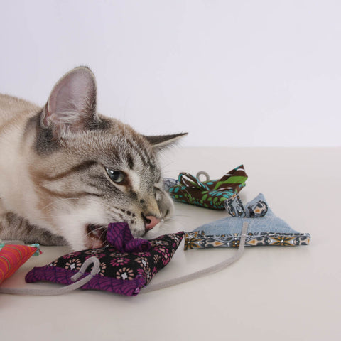 Retro is a Siamese cat, and he likes catnip toys made by The Cat Ball, LLC