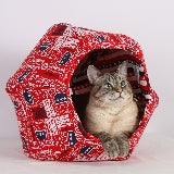 The Cat Ball cat bed Feline Voting Contraption