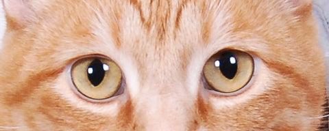 Close up photo of ginger tabby cat eyes by The Cat Ball