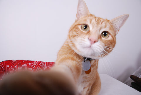 Photo of ginger cat Twix by The Cat Ball
