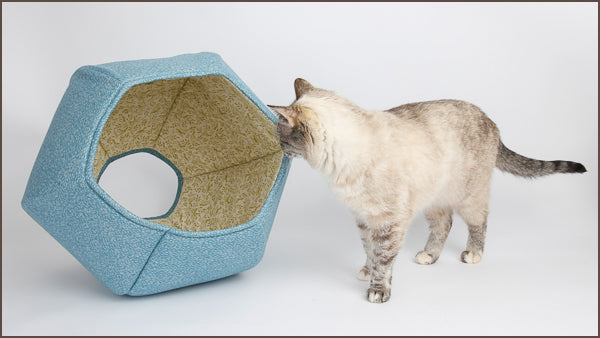 A cat explores the Cat Ball cat bed made in robin egg blue cotton
