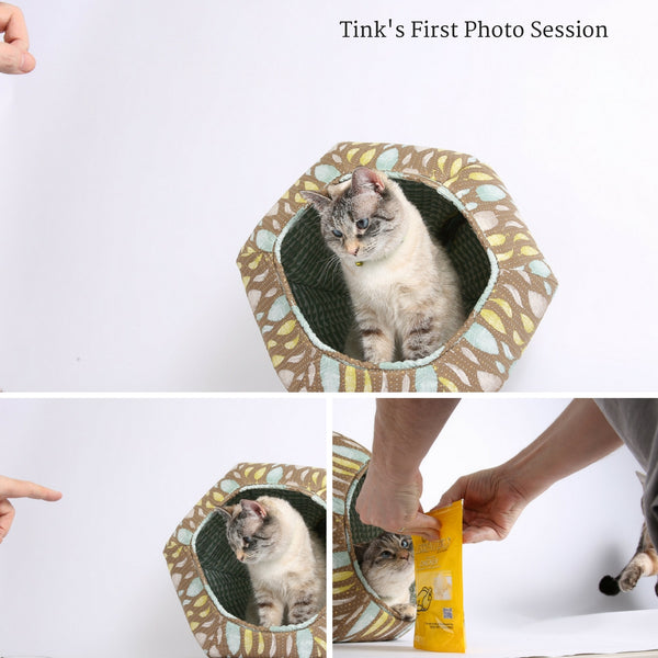 Tink's first photo shoot - a cat photo shoot at the Cat Ball World Headquarters