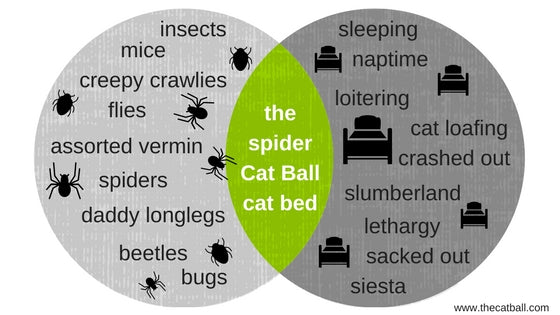 Venn Diagram demonstrating the relationship between spiders and cat beds. By The Cat Ball, LLC