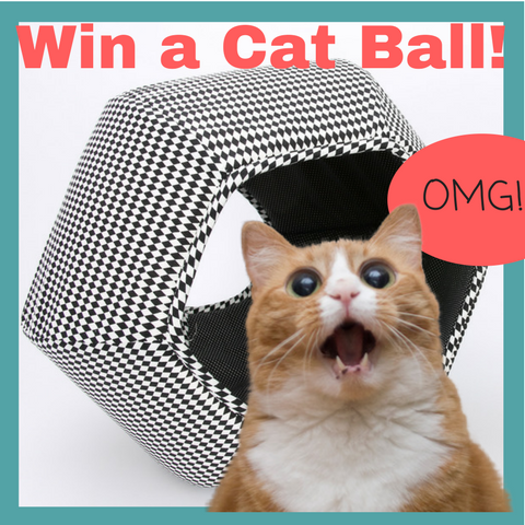 Do you love Purrfect Pals and cat adoptions? You can win a Cat Ball cat bed!