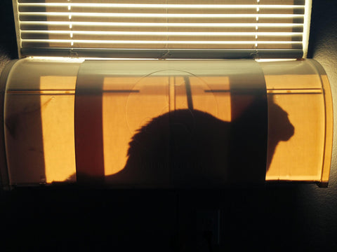 Window Kitty is a patented cat window seat design that allows your cat to use the window without abusing your blinds
