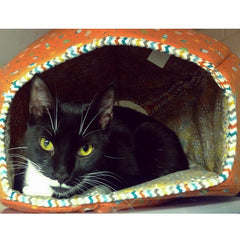 Zorro in the Cat Ball cat bed at Anjellicle Cats Rescue