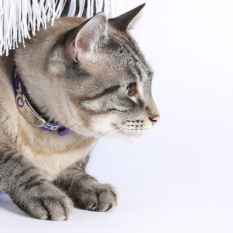 Cat wearing a Beastie Band collar and curved, engraved, pet ID tag