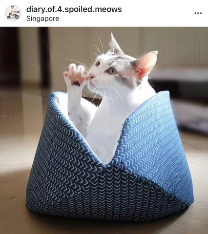 Photo of cat in a jumbo cat canoe, taken by @diary.of.4.spoiled.meows