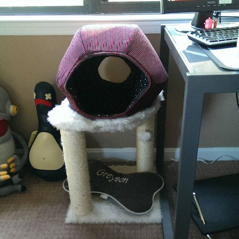 the CAT BALL cat bed placed on a cat tree