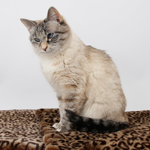 Cat sleeping mat made in a luxury faux fur, the color is a novelty leopard print