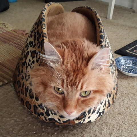 This fluffy orange kitty weighs 25 pounds and is in the jumbo size Cat Canoe