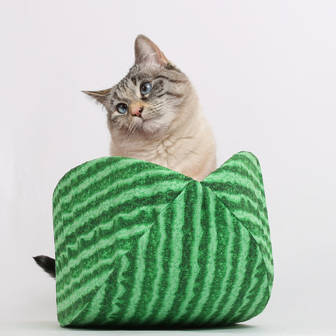 Watermelon Cat Canoe a pet bed that looks like fruit